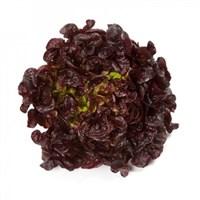 Роксай, семена салата дуболистного (Rijk Zwaan / Райк Цваан)