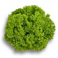 Лозано, семена салата лолло бионда (Rijk Zwaan / Райк Цваан)