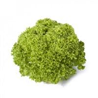 Лугано, семена салата лолло бионда (Rijk Zwaan / Райк Цваан)