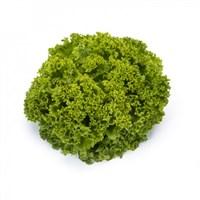 Ландау, семена салата лолло бионда (Rijk Zwaan / Райк Цваан)