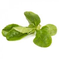 Сирилла, семена салата полевого (Rijk Zwaan / Райк Цваан)
