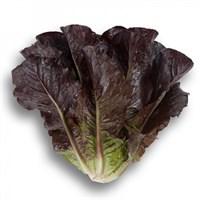 Туринус, семена салата ромэн (Rijk Zwaan / Райк Цваан)