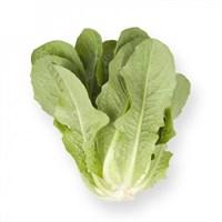 Аувона, семена салата ромэн (Rijk Zwaan / Райк Цваан)