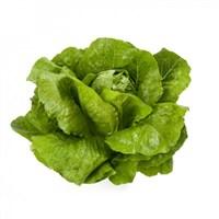 Викторинус, семена салата ромэн (Rijk Zwaan / Райк Цваан)