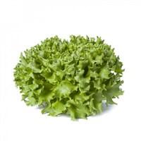 Каравел, семена салата саланова (Rijk Zwaan / Райк Цваан)