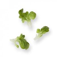 Кук, семена салата дуболистного (Rijk Zwaan / Райк Цваан)