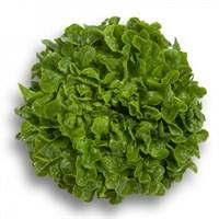 Гумбольдт, семена салата дуболистного (Rijk Zwaan / Райк Цваан)