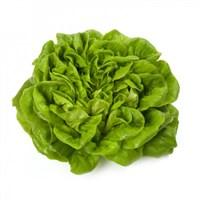 Аквино, семена салата дуболистного (Rijk Zwaan / Райк Цваан)