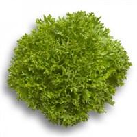 Экспертайз, семена салата саланова с рассеченным листом (Rijk Zwaan / Райк Цваан)