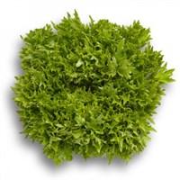 Эксайт, семена салата хрустящего с сильно рассеченным листом (Rijk Zwaan / Райк Цваан)