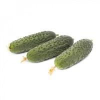 Миамара F1, семена огурца партенокарпического (Rijk Zwaan / Райк Цваан)