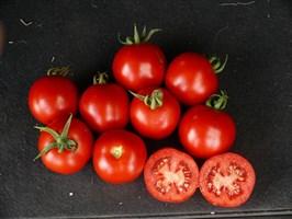Партова F1, семена томата индетерминантного (Seminis / Семинис)