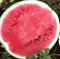 Мастер F1, семена арбуза (Syngenta / Сингента) - фото 6013