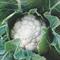 Брюс F1, семена капусты цветной (Syngenta / Сингента) - фото 6092