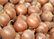 Бурса F1, семена лука репчатого (Syngenta / Сингента) - фото 6139
