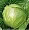 Элиза F1, семена капусты белокочанной (Sakata / Саката) - фото 6229