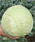 Хипо F1, семена капусты белокочанной (Sakata / Саката) - фото 6239