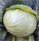 Грандслам F1, семена капусты белокочанной (Sakata / Саката) - фото 6242