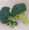 Хронос F1, семена капусты брокколи (Sakata / Саката) - фото 6253