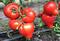 Эрон F1, семена томата индетерминантного (Enza Zaden / Энза Заден) - фото 6610